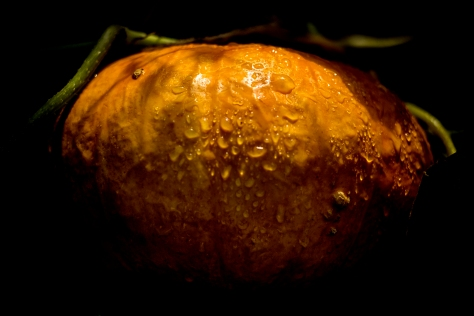 It's Pumpkin Time. Photo by and copyright of Paul Henni.